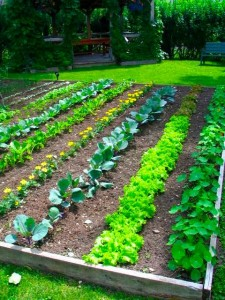 Backyard Gardening Tips for Gardening in your Backyard